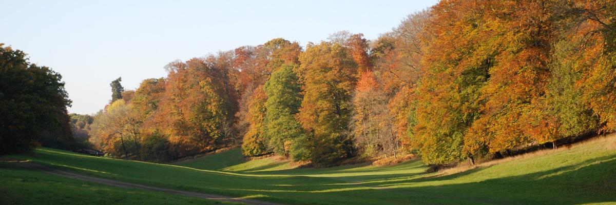 Little Gaddesden valley and woodland