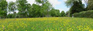 Little Gaddesden wildflower meadow